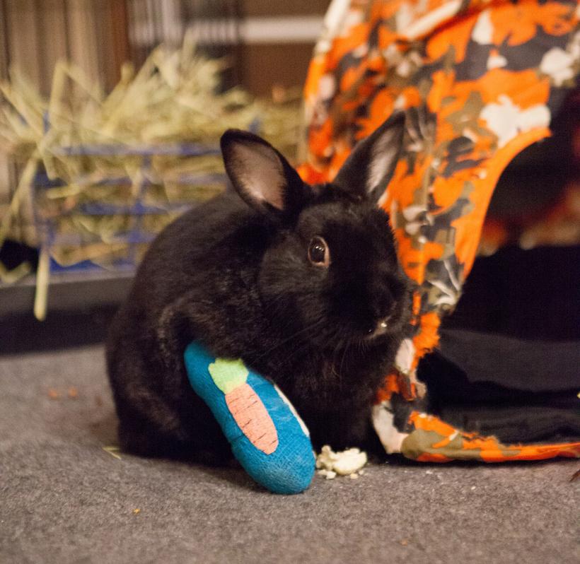 Кролик с гипсом
