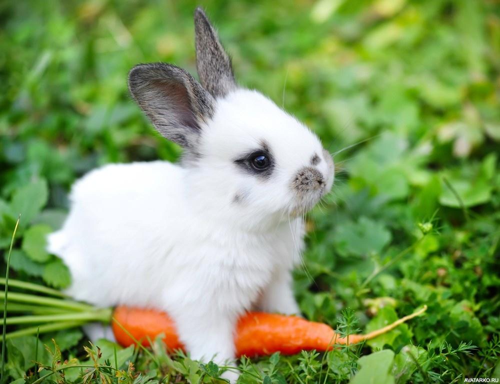 Маленький кролик ест морковь