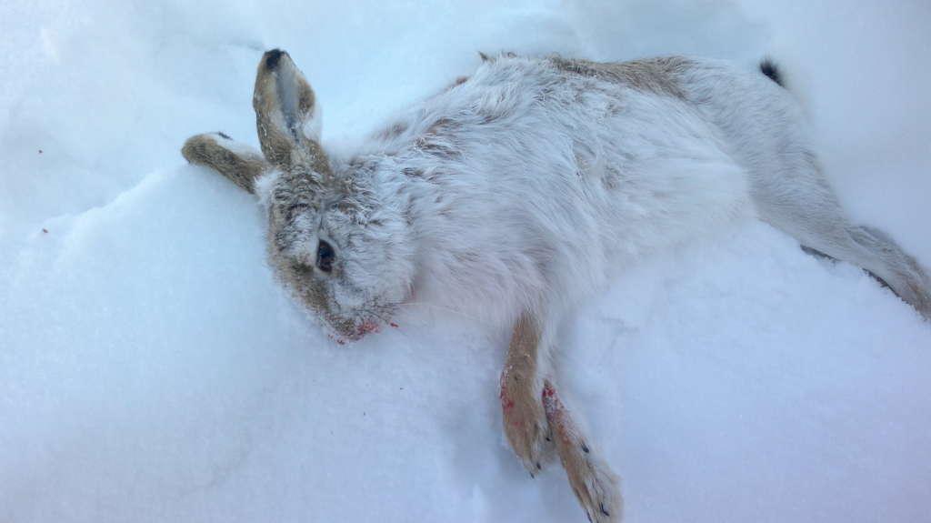 Кролик замерз