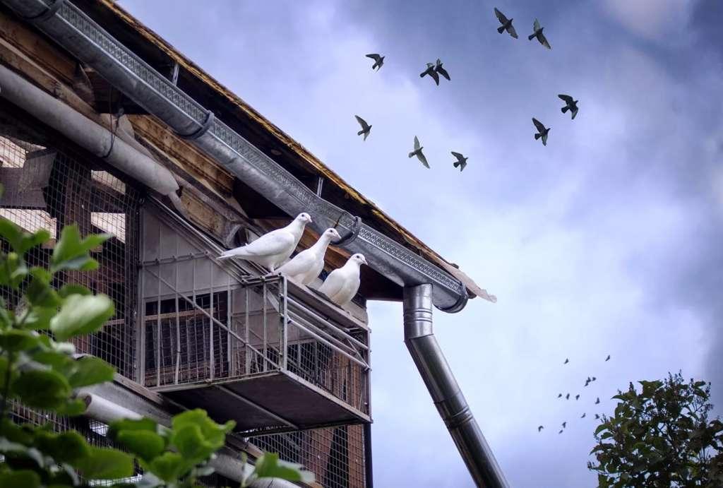 Навесная голубятня