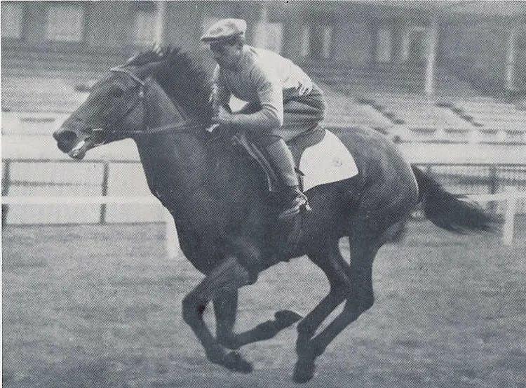 Гнедые лошади: особенности масти, разновидности и уход