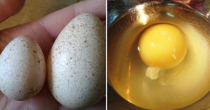 Рецепт из индюшиных яиц