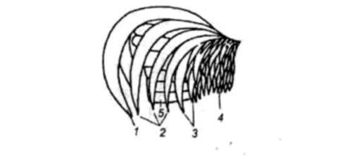 Строение скелета и внутренние органы курицы