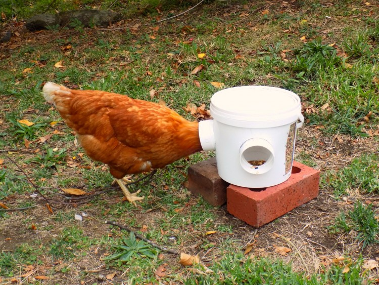 Кормушка для кур