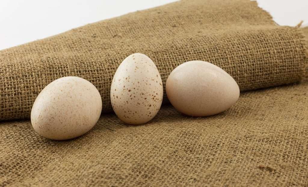 Сырые индюшиные яйца