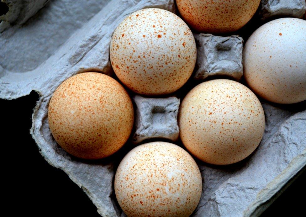 Польза индюшиных яиц