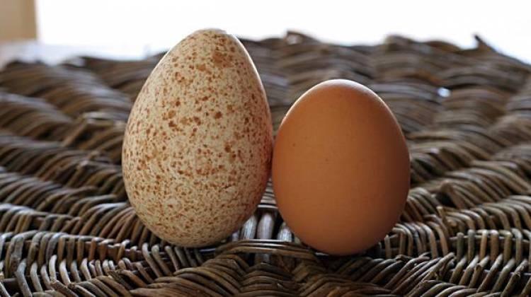 Индюшиное и куриное яйца