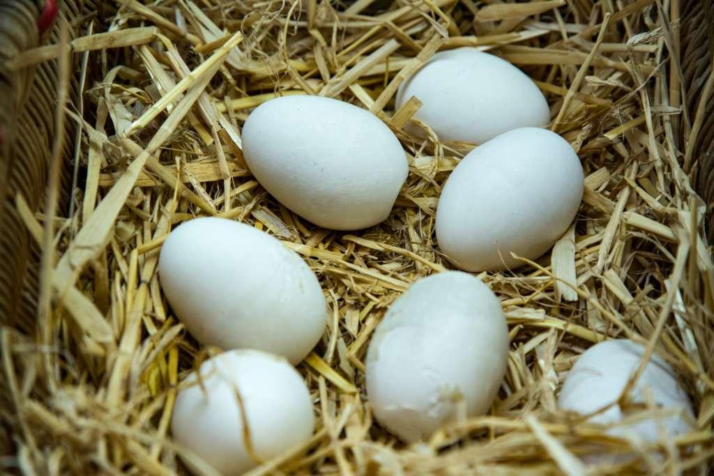 Яйца кур декалб