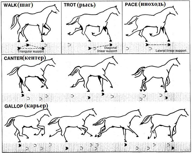 Как приручить коня и завоевать его доверие?