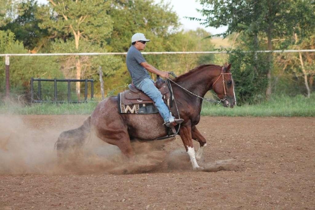 Как осаживать лошадь
