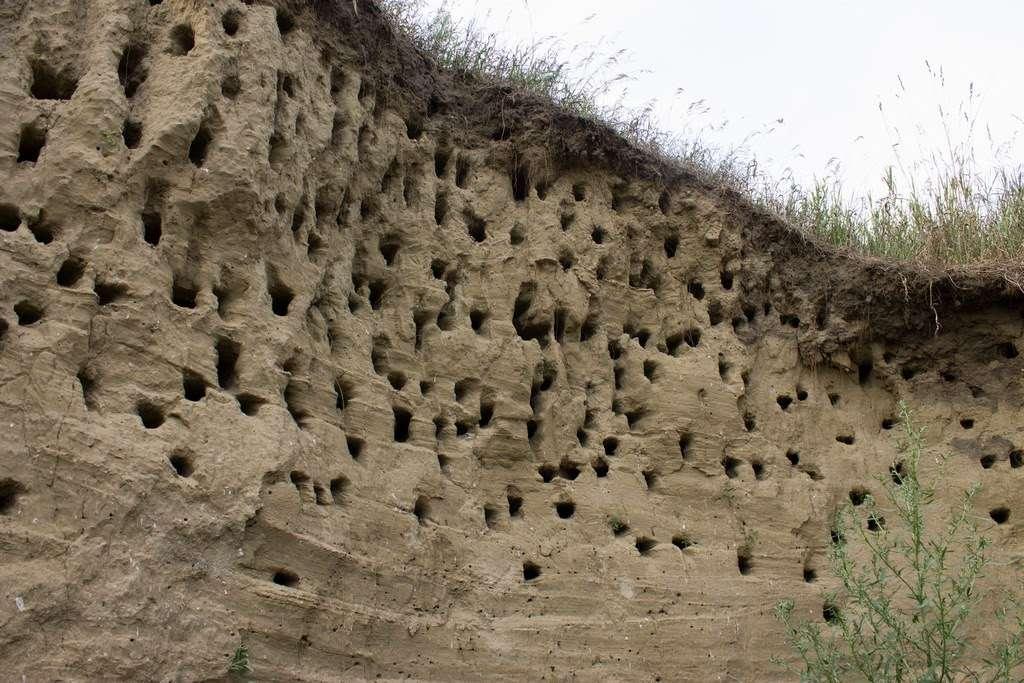 Земляные пчелы: описание, образ жизни и разновидности