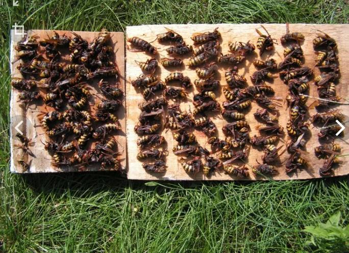 Ловушки от земляных пчел