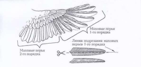 Подрезка крыльев у кур