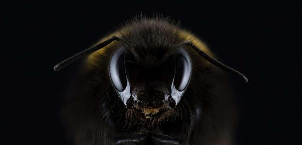 Пчела в темноте