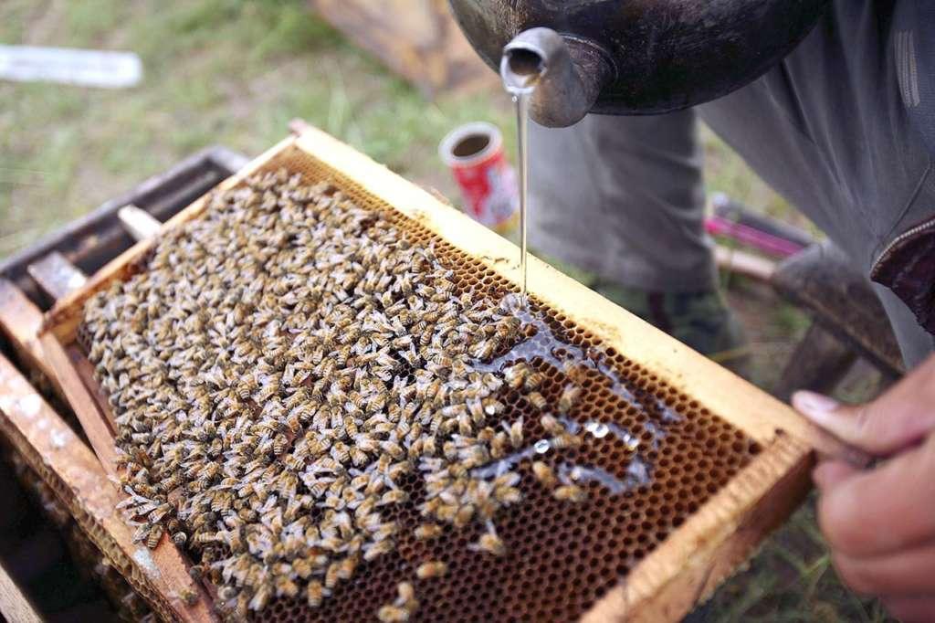 Кормление пчел
